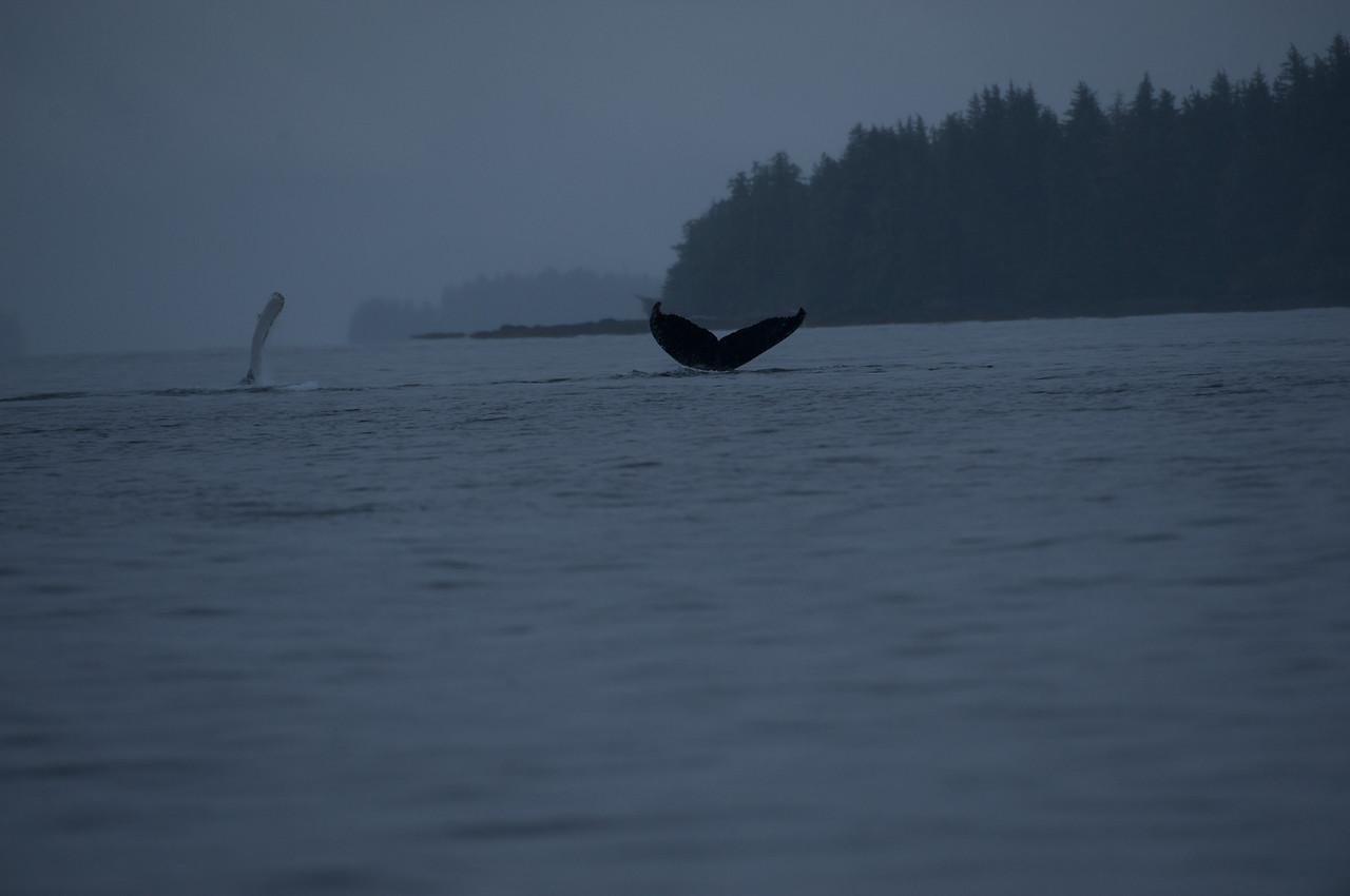 Alaska, Cruise,Whales, Brooks <br /> Lodge, etc.