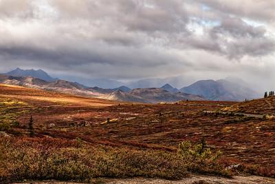 Denali Tundra in the Fall