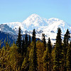 Denali National Park with Mt McKinley in the background in Alaska 2
