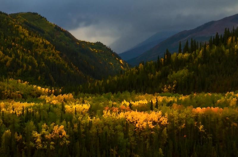 Love those aspens!  Denali National Park.<br /> Photo © Cindy Clark