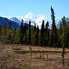 Denali National Park with Mt McKinley in the background in Alaska