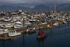 A fine morning at Homer harbor.<br /> Photo © Carl Clark