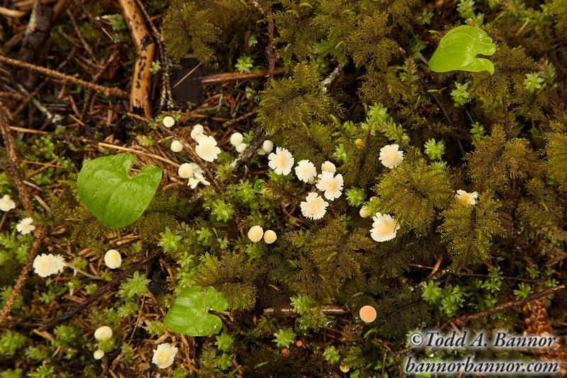 Tiny fringed mushrooms.