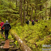 Hikers in temperate rain forest. Near Frederick Sound, southeast Alaska