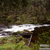 Small waterfall with fish ladder for salmon counting.