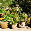 Albuquerque Botanic Gardens 101