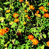 Albuquerque Botanic Gardens 103