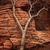 Red Desaturated Sandstone Texture
