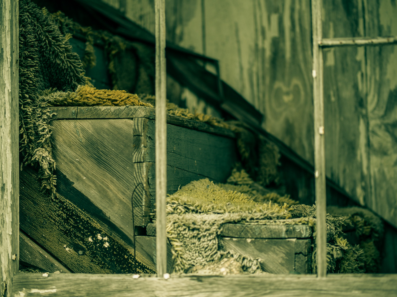 Abandoned Texas Home #3