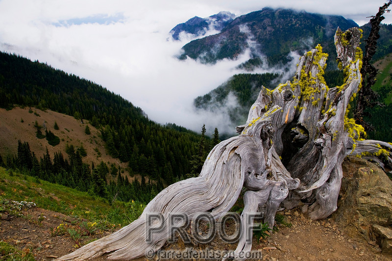 Hurricane Ridge in the Olympic National Park