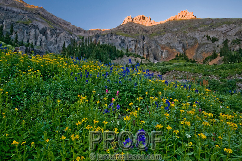The Wild Flowers of Yankee Boy Basin