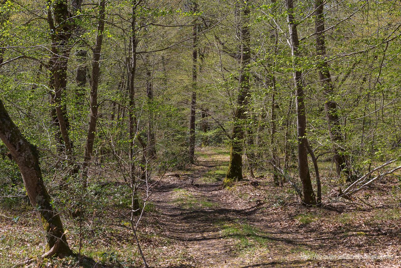 Forêt de Dreuille, f/8, 1/200, iso 200, 70 mm