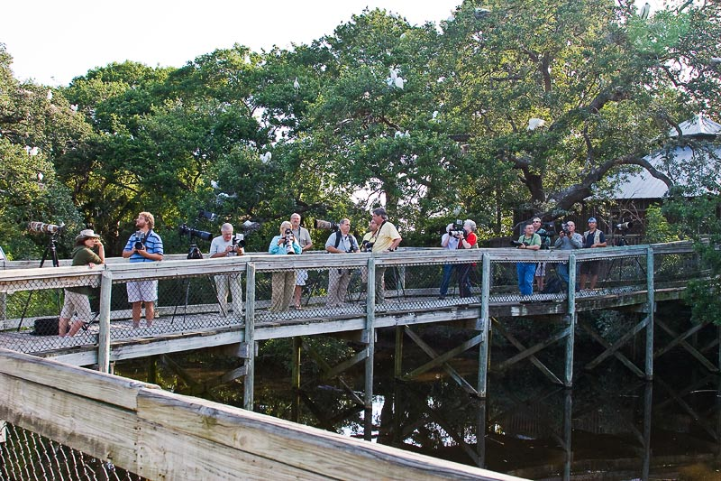 I was not the only photographer at the Alligator Farm on May 1-5.