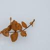 Autumn Remnant