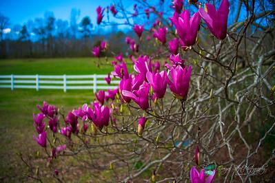 03-29-15 Spring has sprung.....
