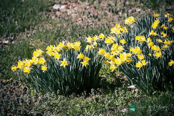 03-22-15 spring has sprung.....