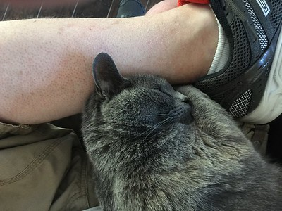 04-18-16 my lap pal...