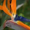 Black Butterflies Photography