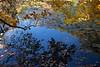 adams pond_9911