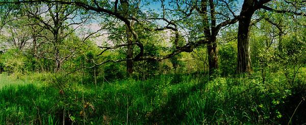 spring green pano