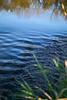 ripples114