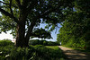 tree_road_17
