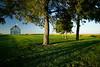 barn_trees9_03_31