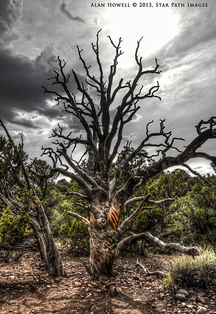 Dinosaur_Ancient Tree_17_HDR
