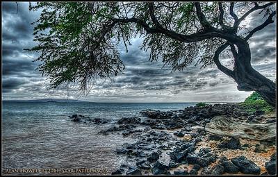 Wailea, Maui. Beach Tree.