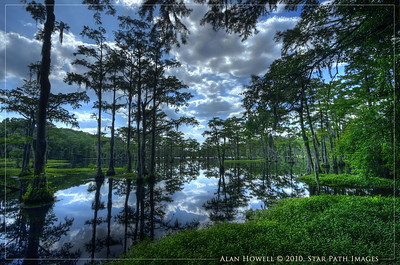 NC Blackwater Swamp_HDR