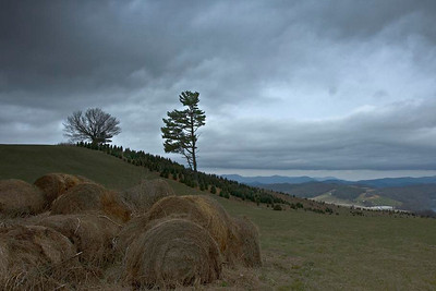Storm clouds forming over a small Christmas tree farm near Boone NC, off the Blue Ridge Parkway.