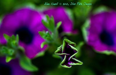 Flower in macro.
