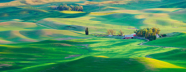 Palouse wheatfields in evening light, Washington