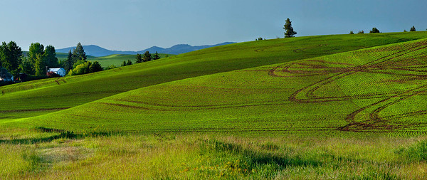Panorama of wheatfield patterns, farmhouse and distant mountains, Palouse country, Washington state