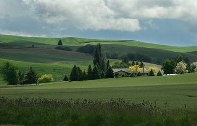 Green fields with house, Washington