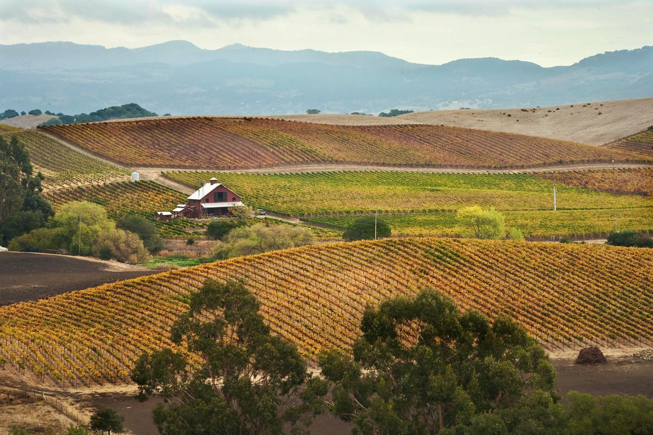 California vineyard, Napa valley