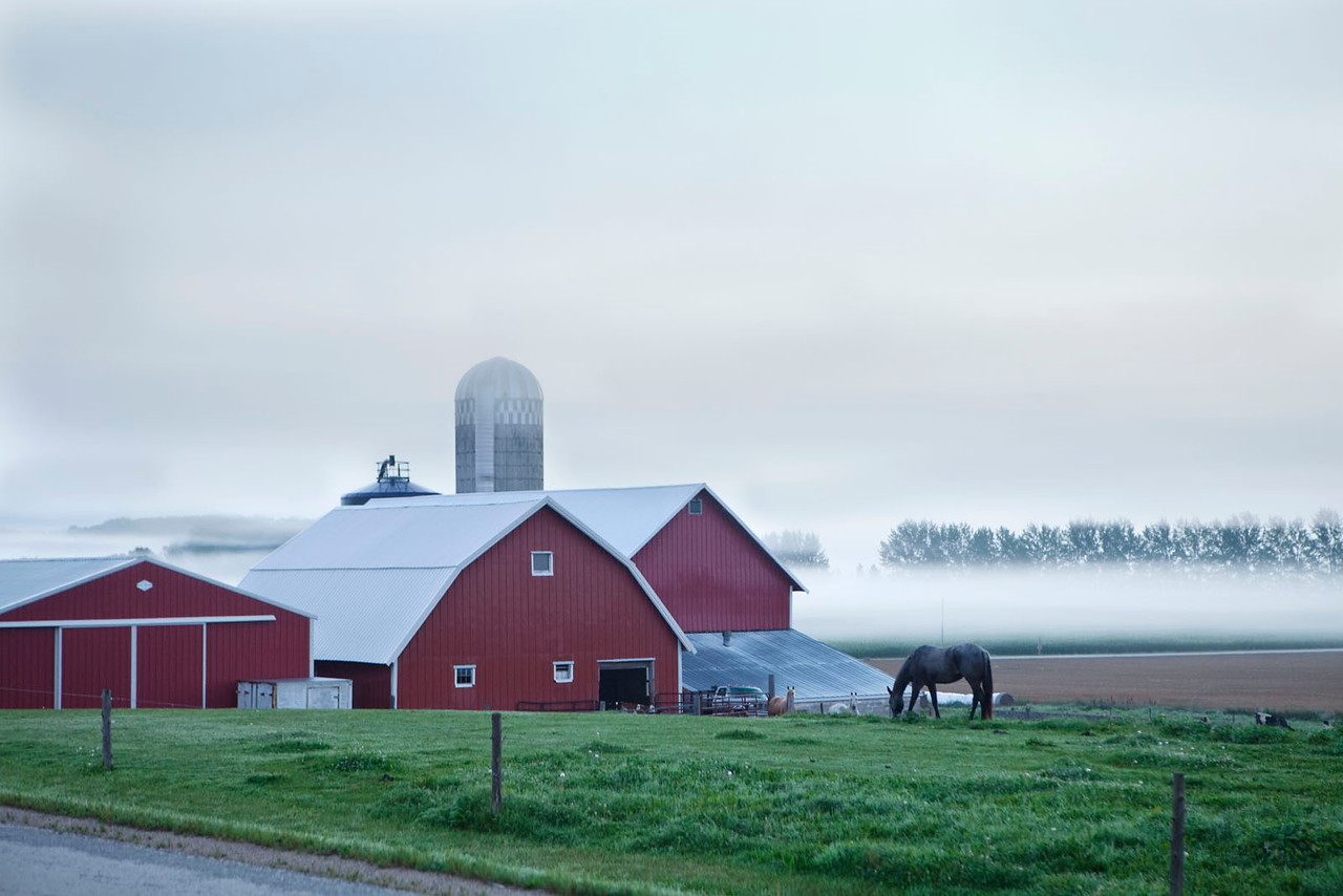 Redbarns, mist and horse, Wisconsin