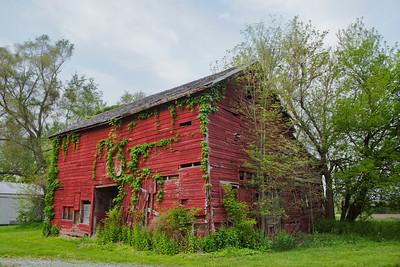 Red barn with Ivy, near Kankakee, Illinois