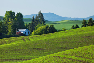 Green wheatfield and farmhouse with mountains