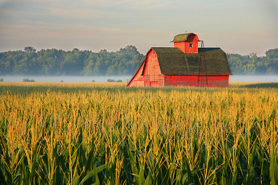 Cornfield with red barn, Illinois