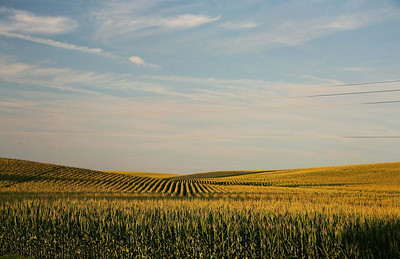 Illinois cornfield designs