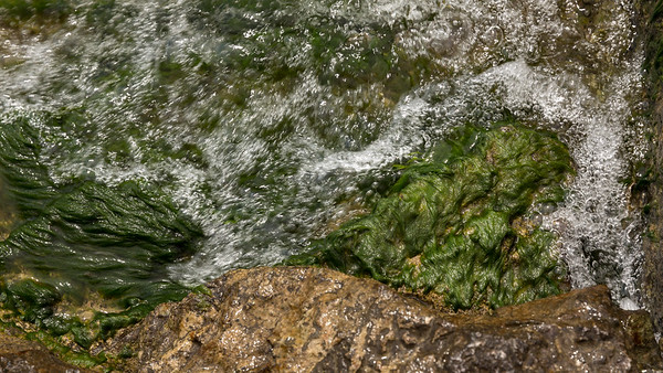 Algae and Rock
