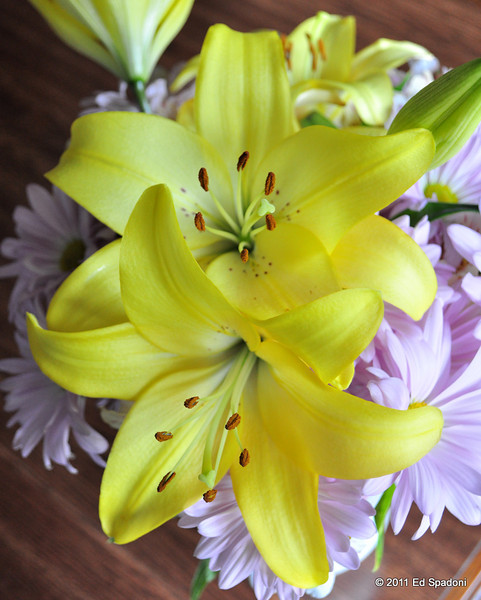 Yellow lilies, 2