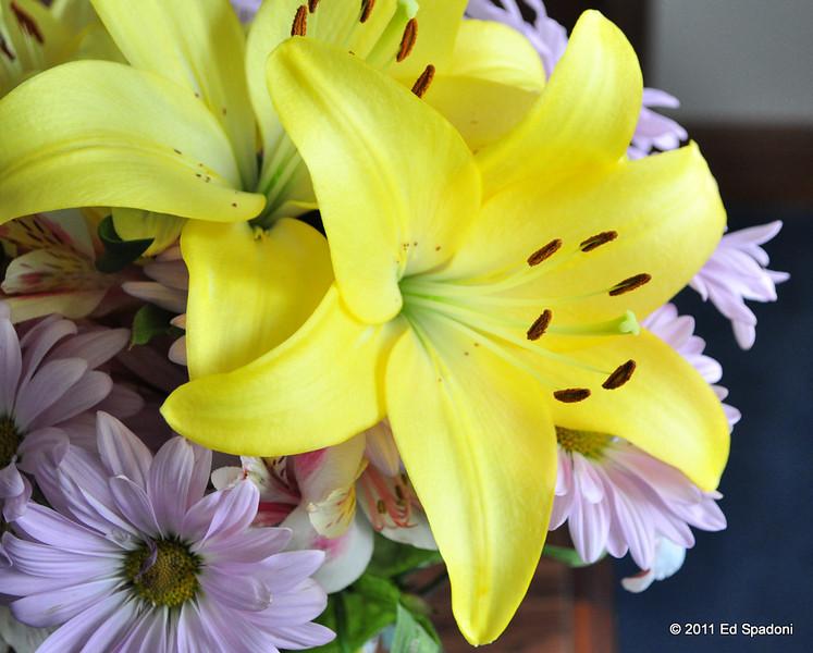 Yellow lilies, 3