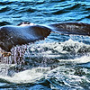 Whale Watching - Cape Cod, MA