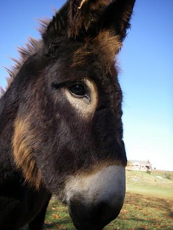 HeeeeeHaaaawww!!!!   (That's donkey for 'whassup, got apples?')
