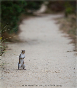 Curious squirrel on the back trails of Cape Cod.
