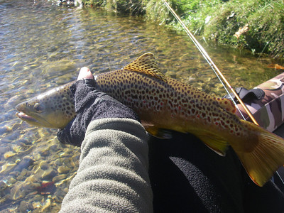 Big male brown trout taken from the kayak.
