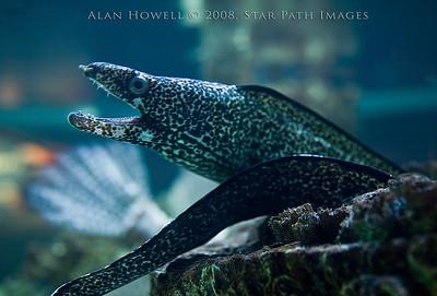Small green moray eel saying 'heeeeeyyyyy!'.   Seriously, that what he said.