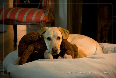 Greensboro winston salem charlotte raleigh nc pet photographer dog canine cat photography.  The Abster with her monkey.